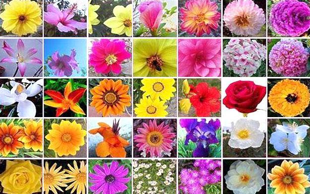 Informacion sobre las flores y sus partes imagui - Todo sobre las plantas ...
